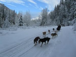 Jasper Canada dogsledding tours