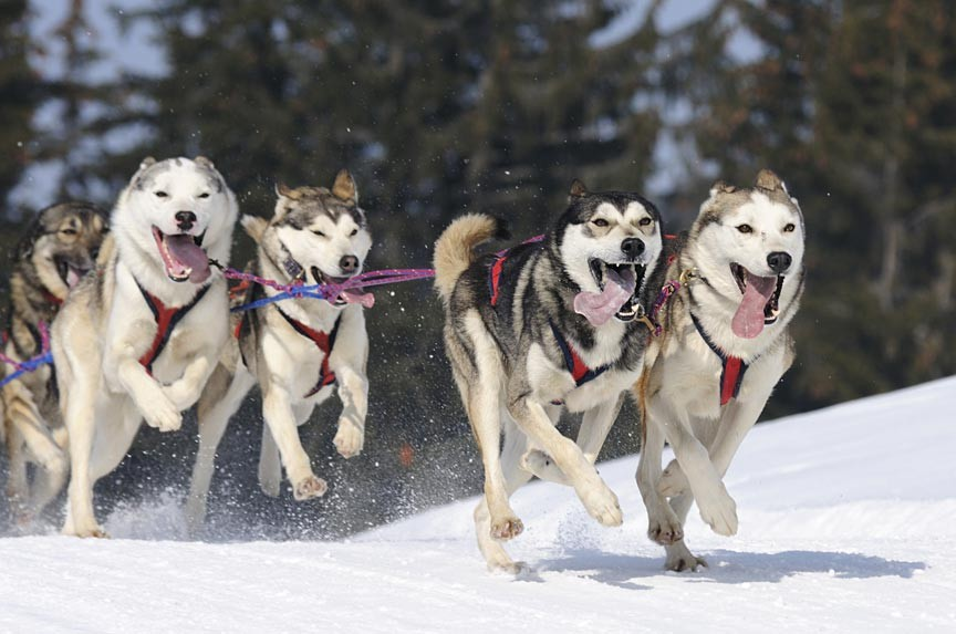 dog Sledding Tours of the canadian rockies