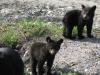baby-bear4