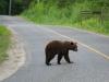 bearinroad